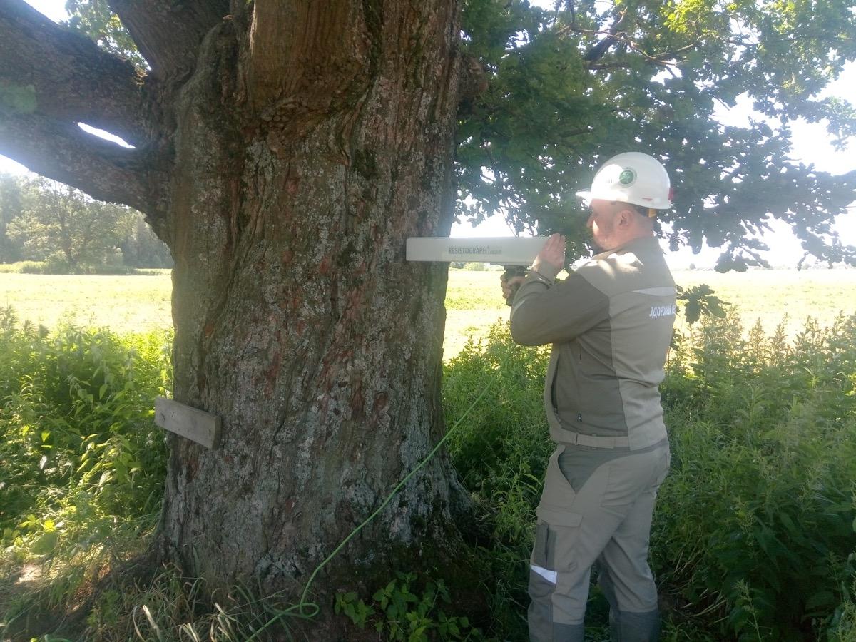 Состоялся первый в этом году выезд специалистов Центра древесных экспертиз к деревьям – памятникам живой природы всероссийского значения