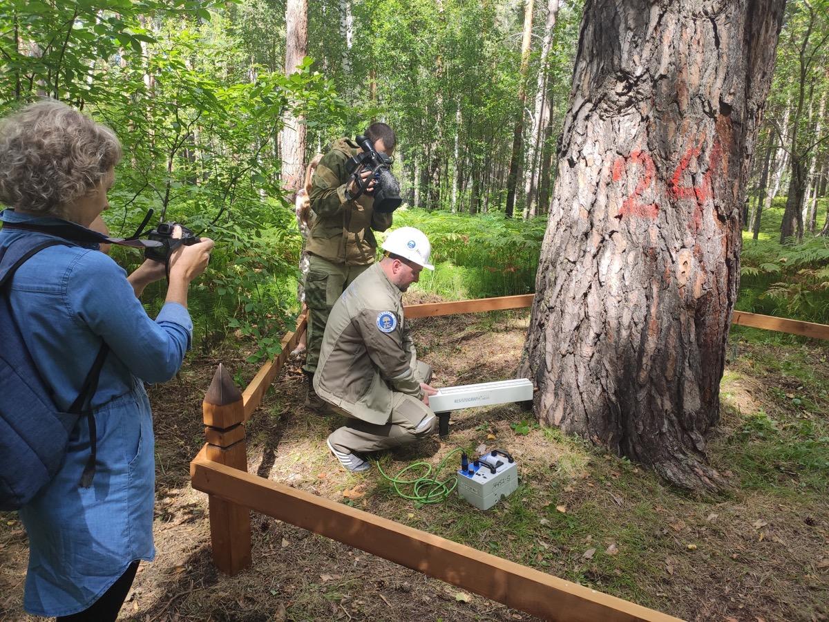Специалисты Центра древесных экспертиз выехали в Красноярский край