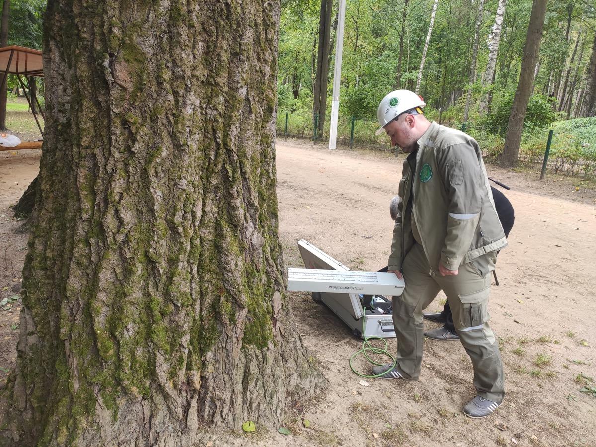 Всероссийская программа «Деревья – памятники живой природы» продолжает реализовывать свою деятельность на территории Московской области