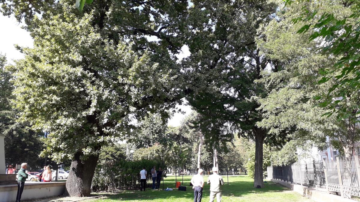 Специалисты Центра древесных экспертиз посетили Краснодар