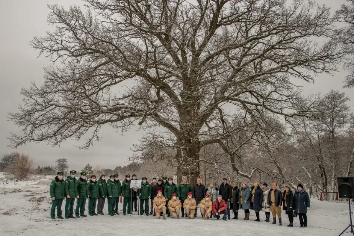 Самому знаменитому дереву Брянщины вручен диплом финалиста всероссийского конкурса «Российское дерево года – 2020»